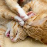 Katzen beim Raufen